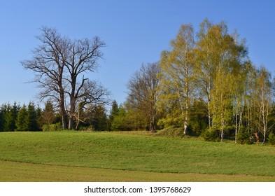 spring landscape, southern Bohemia . Czech Republic