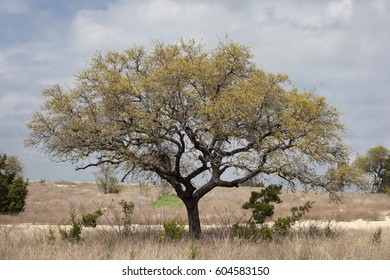 Spring Landscape / Tree
