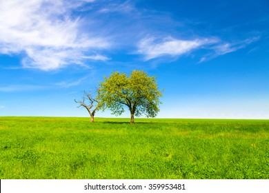 Spring landscape, trees and blue sky