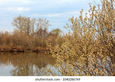 Spring landscape with trees on the lake.