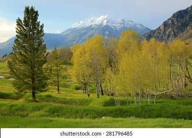 Spring landscape in the Utah mountains, USA.