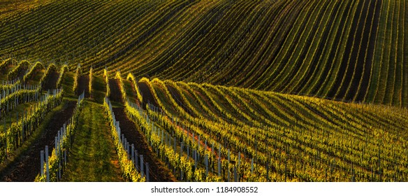 Spring landscape with vineyards in the hills of South Moravia. Rows of vineyards on a spring evening. Spring scenic landscape of South Moravia in Czech Republic. Nature agriculture background.
