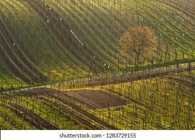 Spring landscape with vineyards. South of Moravia, Czech Republic.