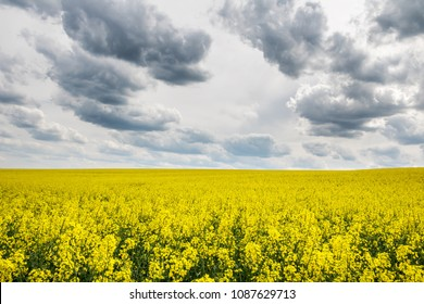 Spring landscape with yellow flowering colza field under dramatic cloudy sky - Czech Republic, Europe