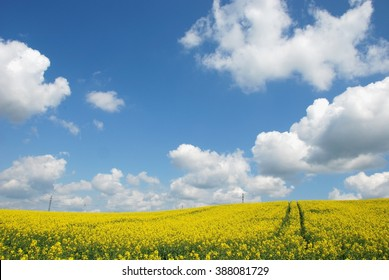Spring Landscape. Yellow flowering fields and blue sky, Nature background.