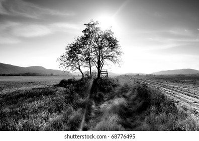 Spring landscape,black and white photo