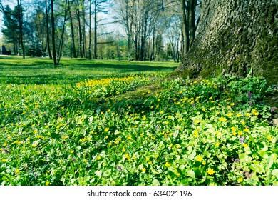 Spring landscape/toned photo