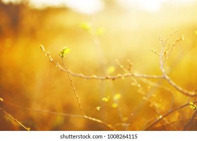 spring leaves in morning fresh sinlight in nature