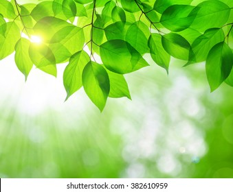 Spring leaves on natural green background.