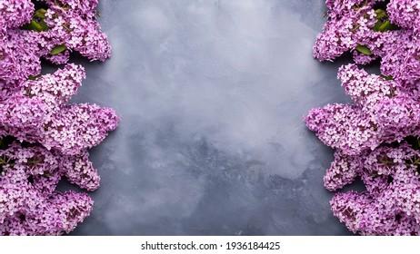 Frühlingslila Blumen auf grauem Hintergrund mit Rahmen für Text. Banner
