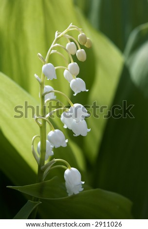 Spring Lily Valley Flowers On Green Stock Photo Edit Now 2911026