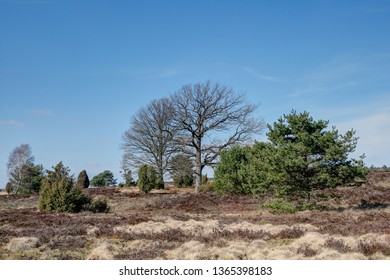 Spring in the Lueneburg Heath. The spring sun warms the heath-covered areas and the birdsong announces the spring in one of the most scenic regions of Germany, the Lueneburg Heath.