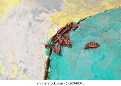 Spring mating of insects in wildlife in the forest