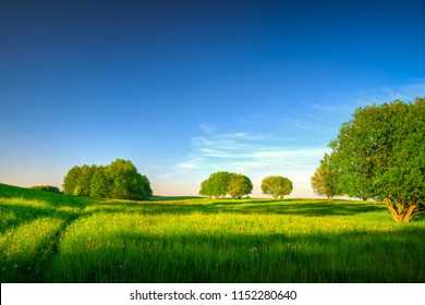 spring meadow among trees. May landscape. Masuria, Poland.