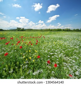Spring meadow and beautiful flower at day.  Composition of nature.