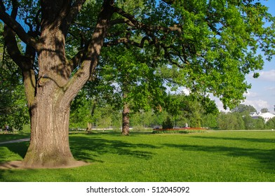 a spring meadow with big tree with fresh green leaves