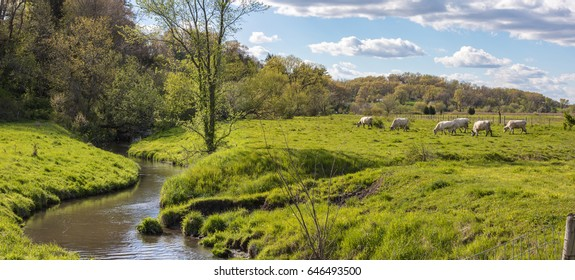 Spring meadow and creek with cow grazing