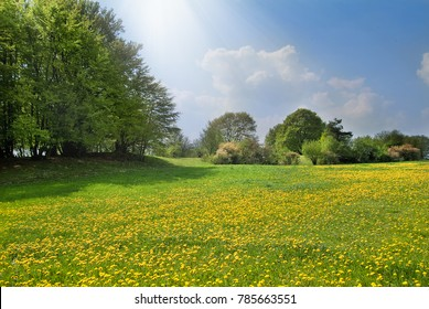 Spring meadow with dandelion