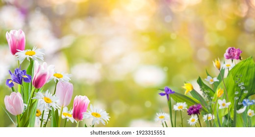 Spring meadow with different flowers flowers on beautiful background for your design