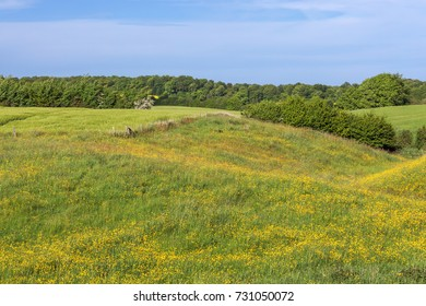 Spring meadow with flowering buttercups. In the background fields and hedgerows in Schleswig-Holstein, Germany.