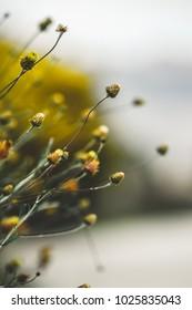 Spring. Meadow flowers