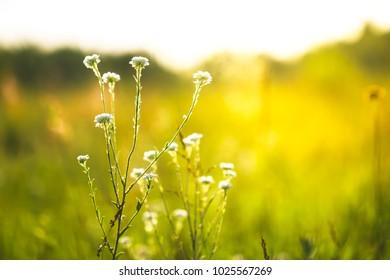 Spring. Meadow flowers in field. Sunny photo