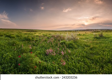 Spring meadow with flowers on sunset