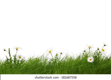 Spring meadow with grass and flowers isolated on white background