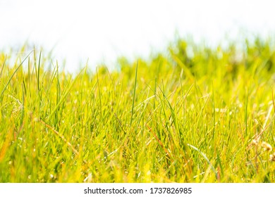 Spring meadow. Grass - natural blurry background.