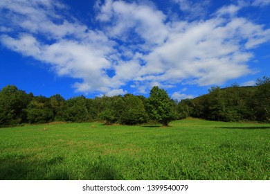 spring meadow in Pyrenean, Aude in the southern of France