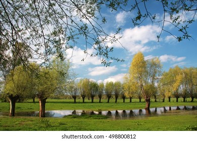 spring - meadow with remnants of standing water with willows and a lovely sky with white clouds