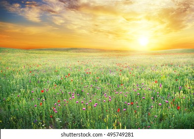 Frühlingswiese mit violetter Blume. Naturzusammensetzung.