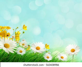 Spring meadow with wild flowers with bokeh background