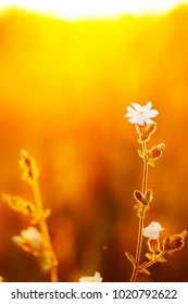 Spring. Meadow wild flowers at evening sunshine. Fresh natural sunny autumn background