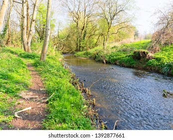 A spring morning beside a woodland river as it winds between banks lined with Beech trees