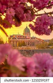 Spring Morning Budapest, Cherry blossom Buda Castle - Hungary