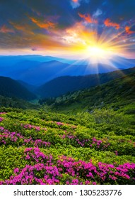 spring morning dawn landscape, picturesque blooming flowers on meadow of mountain on background green hills and valley covered forest, floral nature sunrise vertical image,  Carpathians, Europe