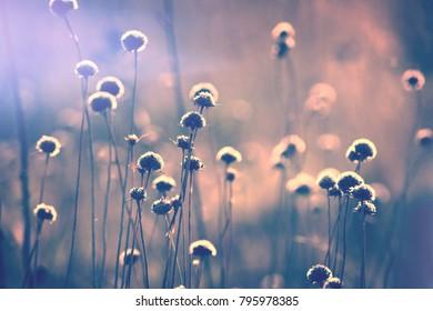 Spring morning field, soft violet light background.