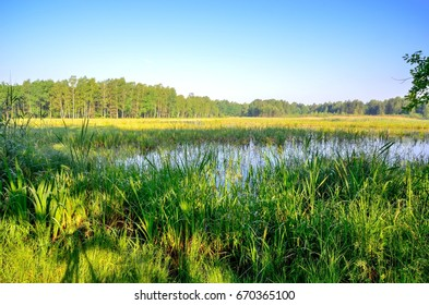 Spring morning landscape. Green grass in a pond.