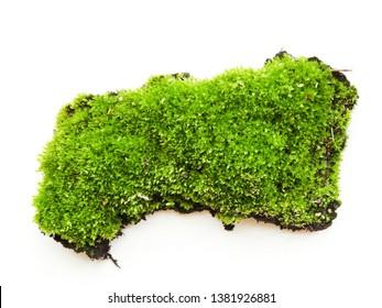 Spring moss on white background. Shallow dof.