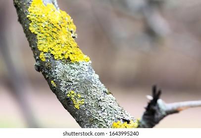 Spring mossy tree branch view. Branch moss view. Mossy branch macro view