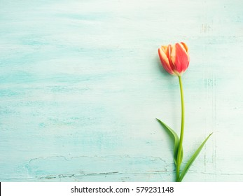 Spring mother woman day easter tulip floral minimal pastel color background with copy space. Top view