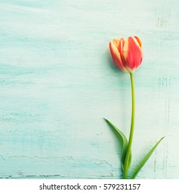 Spring mother woman day easter tulip floral minimal pastel color background with copy space. Top view. Square