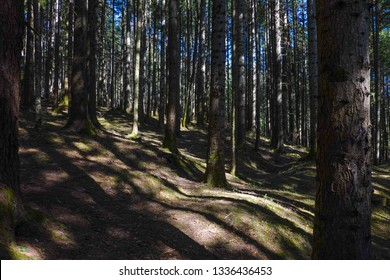 Spring mountain hiking trail in a forest from Ceahlau Massif in Romania
