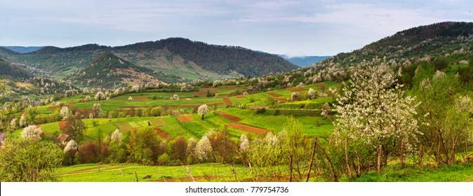 Spring Mountain panorama landscape. Valley with blooming trees. Apple orchards blossom on mountain hills. Panoramic view of Carpathian / Tatras mountain range with blooming trees on spring day