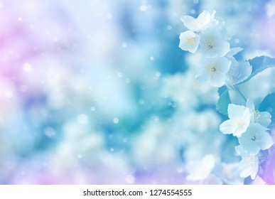 Spring natural  background with bright blooming jasmine. Gentle spring background