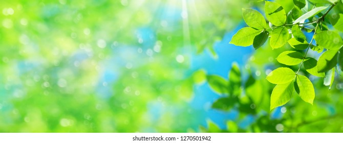 Spring natural background with bright fresh willow leaves. Natural background for design