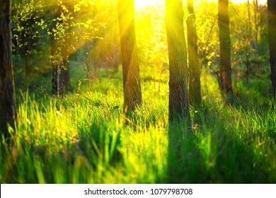 Spring Nature background. Beautiful Landscape. Park with Green Grass and Trees. Nature scene with sun. Tranquil Background, sunlight