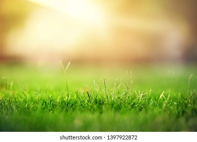 Spring and nature background concept, Close up green grass field with blurred park and sunlight.