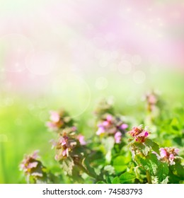 Spring nature background with field flowers
